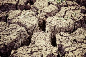Dried up expansive, clay rich soil